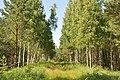Meža ceļš, Babītes pagasts, Babītes novads, Latvia - panoramio.jpg