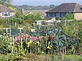 Merrow Allotments - geograph.org.uk - 589104.jpg