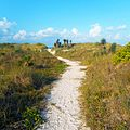 Miami Beach - Sand Dune Flora - Walking Path Through Bushes and Plants.jpg