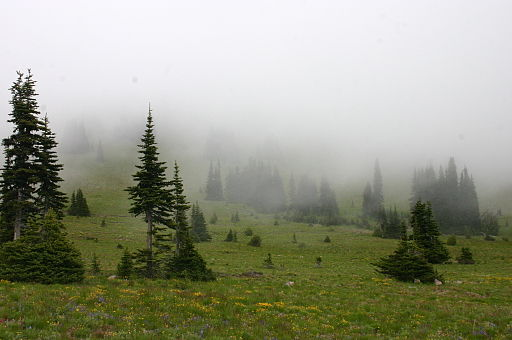 Mist Covering a Meadow under Forest Encroachment