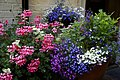 Mixed potted plant flowers in a beer garden at Nuthurst West Sussex England.jpg