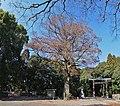 Miyazaki Jingu(shrine) , 宮崎神宮 - panoramio (10).jpg