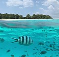 Mnemba Island - Zanzibar - Flickr - Jorge Lascar.jpg
