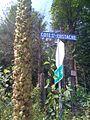 Molène thapsus d'au moins 6 pieds de haut au bord du Chemin de Mille-Isles (4864854268).jpg