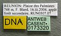 Monomorium termitobium casent0173320 label 1.jpg