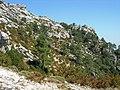 Monte Caro - panoramio (2).jpg