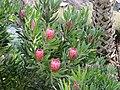 Monte Palace Tropical Garden, Funchal - 2012-10-26 (27).jpg