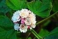 Morning flower buds.jpg