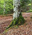 Moss on tree 2.jpg