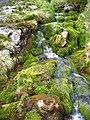 Mossy stream on descent from Beinn Alligin - geograph.org.uk - 64340.jpg