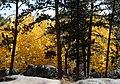 Mount Margaret Trail 10-3 (21982646686).jpg