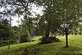 Mount Wilson NSW 2786, Australia - panoramio (93).jpg