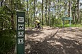 Mt Coot-tha Forest (6971561754).jpg