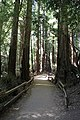 Muir Woods National Monument 2010 11.JPG