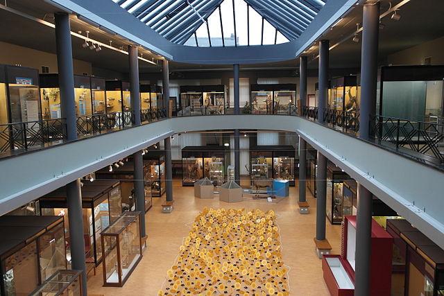Musée d'histoire naturelle de Mons