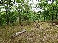 NP Podyjí, les u Popic (2).jpg