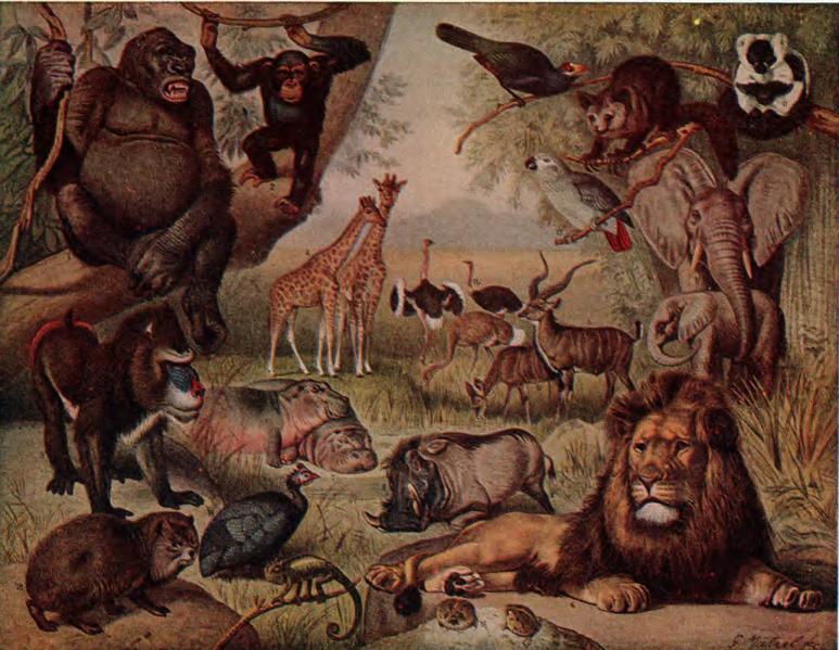 Description nsrw african animals in djvu.djvu
