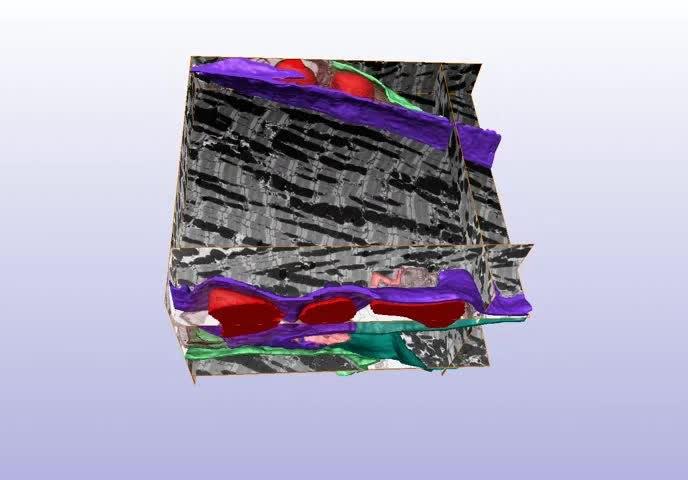 Filenanoscale Visualization Of Functional Adhesionexcitability