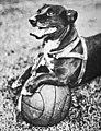 Napoleon perro atlanta.jpg