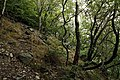 National nature reserve Milešovka in summer 2014 (12).JPG