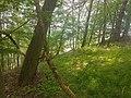 Nationalpark Eifel -18- samsung s7 camera.jpg