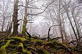 Nationalpark Hunsrück-Hochwald 5.jpg