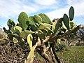 Nature des Monts Beni Chougranes Mohammadia 13.jpg