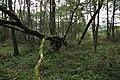 Nature reserve Dobrockovske hadce in autumn 2011 (4).JPG