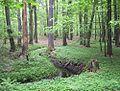 Nature reserve Puszcza Marianska03.jpg