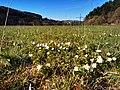 Naturschutzgebiet Sinnwiesen von Altengronau (2).jpg