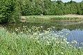 Natuur De Kroeten P1140780.jpg