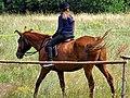 Nauka jazdy konnej w Borsku.jpg