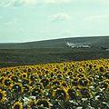Near Anenii Noi (1972). (14591846311).jpg