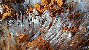 Capillary pressure - Image of needle ice