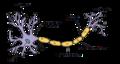 Neurona wiki cat.png