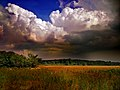 Nicholas T - Loom (by).jpg