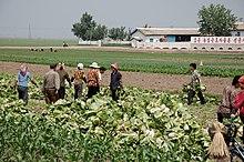 Agriculture in North Korea - Wikipedia
