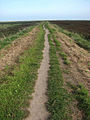 North on the Peddars Way-Norfolk Coast Path - geograph.org.uk - 980672.jpg