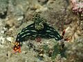 Nudibranch (6997577741).jpg