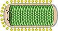 Nudivirus virion.jpg