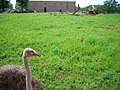 OKC Zoo May 2007 - 55 (497242689).jpg