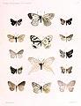 OberthurÉtudes d'entomologie1891 Plate3 (cropped and adjusted).jpg