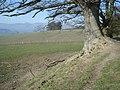 Offa's Dyke Path near Barland - geograph.org.uk - 900435.jpg