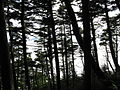 Okuchichibu-Forest 03.jpg