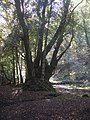 Old Woodland by the River Dart - geograph.org.uk - 1003651.jpg