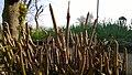 Old little logs.jpg