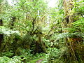 Oparara Basin Native forest 3.JPG
