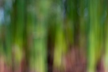 Out of Focus Green Backgounds-3.jpg