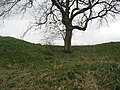 Outer bank of earth fort at Little Sodbury - geograph.org.uk - 1217724.jpg