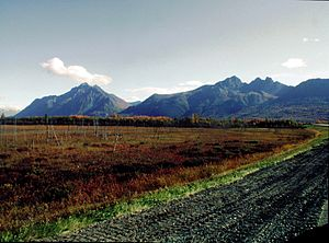 "Palmer, Alaska - The view traveling toward Anchorage from Palmer. Pioneer Peak is to the left with Twin Peaks to the right of Pioneer.   The ""Ghost Forest"" of the Palmer Hay Flats State Game Refuge is shown in the foreground. These trees died from the subsidence that occurred in the area as a result of the Great Alaska earthquake of 1964."
